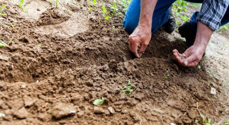 Preparo e conservação do solo na produção de café