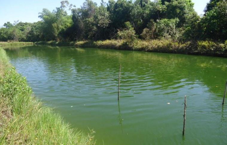 A importância da qualidade da água na piscicultura