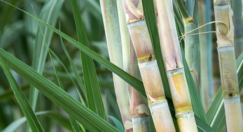 Produtos derivados da Cana-de-Açúcar