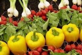Venda de orgânicos é sinônimo de oportunidade
