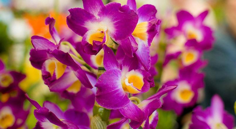 Boas práticas qualificam a estruturação do cultivo de flores