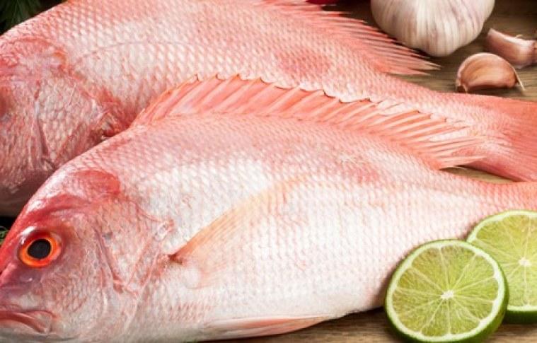 Produtores e mercados de piscicultura: momento de aproximação