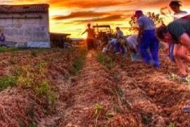 A importância da agricultura familiar