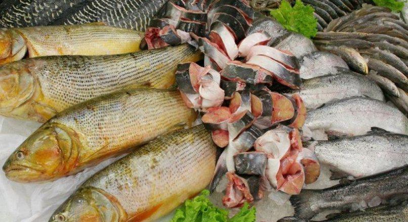 Espécies de pescado mais cultivadas no Brasil