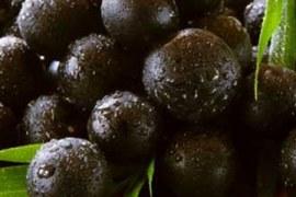 AÇAÍ – Fonte de nutrientes e oportunidades