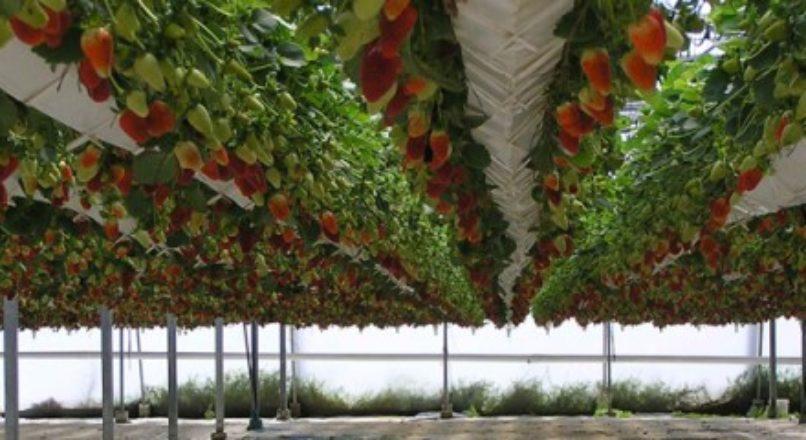 Inovação ao agronegócio.