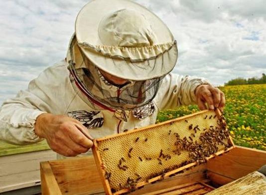 06-001-apicultura