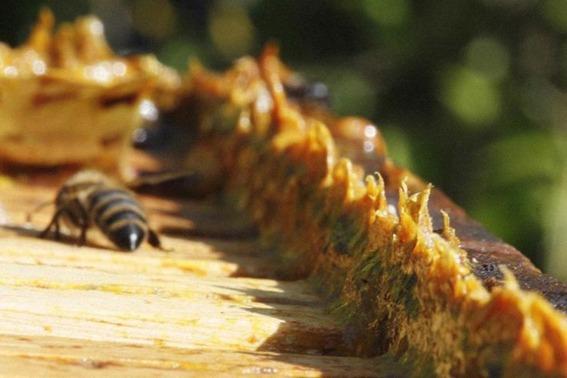 06-003-apicultura