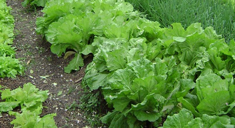 Fatores que influenciam as atividades da horticultura