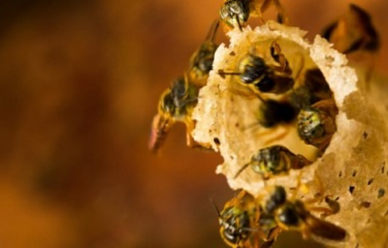 Brasil: potencial fabuloso para atividade apícola