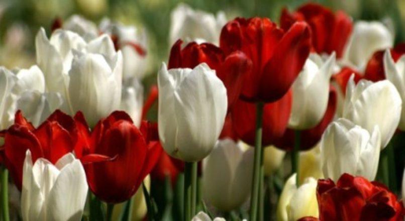 Floricultura virtual: aposte nesta ideia
