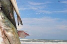 Benefícios do pescado para a saúde – oportunidade de negócio!