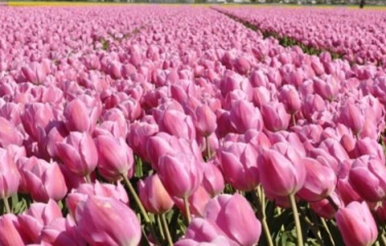 O mercado internacional das flores