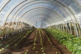 Oportunidades da horta orgânica em estufa