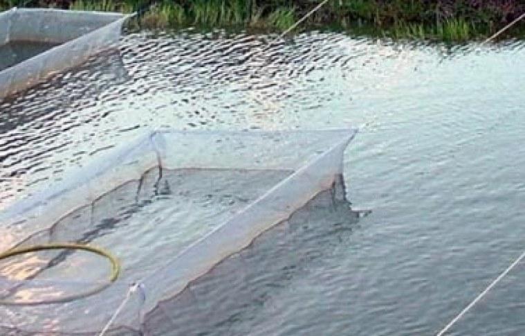 Produtor de peixes, monte sua estratégia de mercado