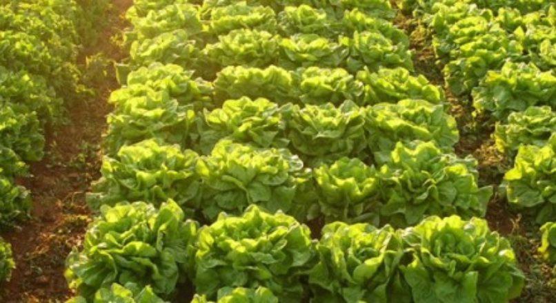 Inovação aumenta a produtividade no agronegócio