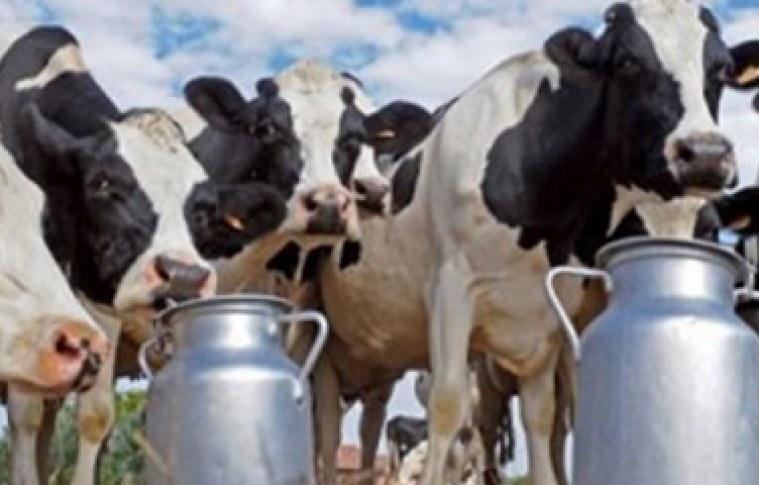 Dicas para gerenciamento de uma propriedade leiteira