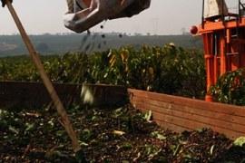 Sistema de colheita reduz despesa e melhora remuneração