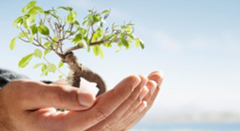 Sustentabilidade nos pequenos negócios