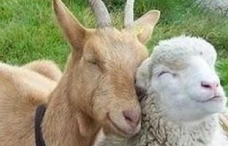 Produtos de ovinos e caprinos têm forte aceitação no mercado baiano