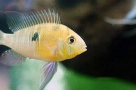 Feira Nacional de Peixes de Água Doce será em outubro