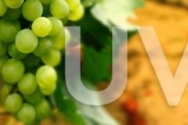O mercado da uva