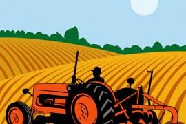 Agricultura familiar e alimentação escolar de mãos dadas