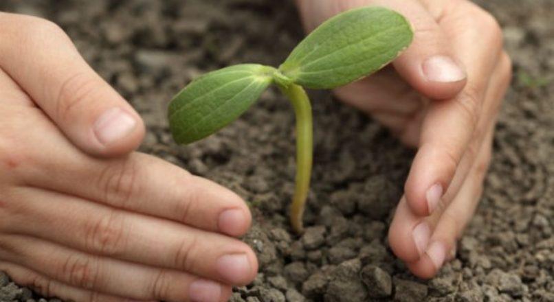 Controle de pragas e doenças em sua horta