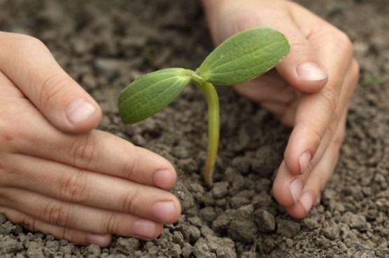 sebrae mercados, horticultura, evitando pragas em sua horta