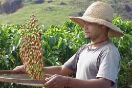 Cafés gourmet e orgânico: perfil dos produtores