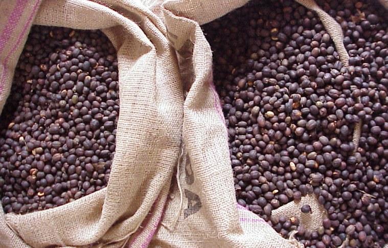 Cafés gourmet e orgânico: análise do produto
