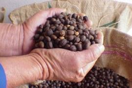 Cafés gourmet e orgânico: definição de preço