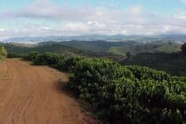 Cafés gourmet e orgânico: turismo