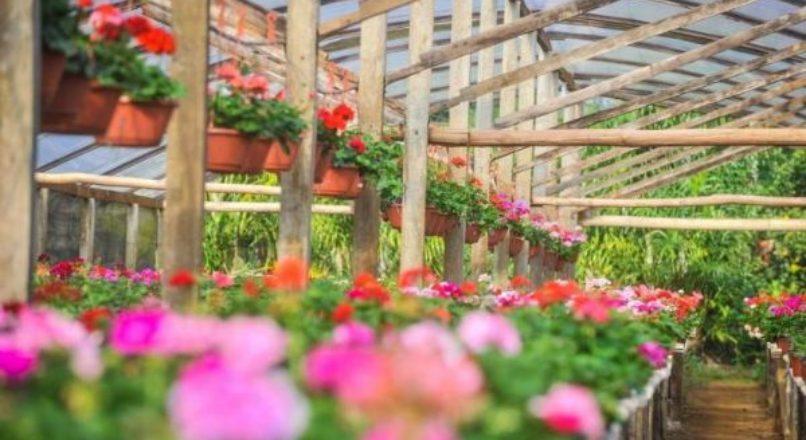 Estrutura para o cultivo de flores