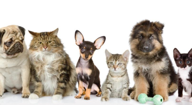 De olho nos animais de estimação