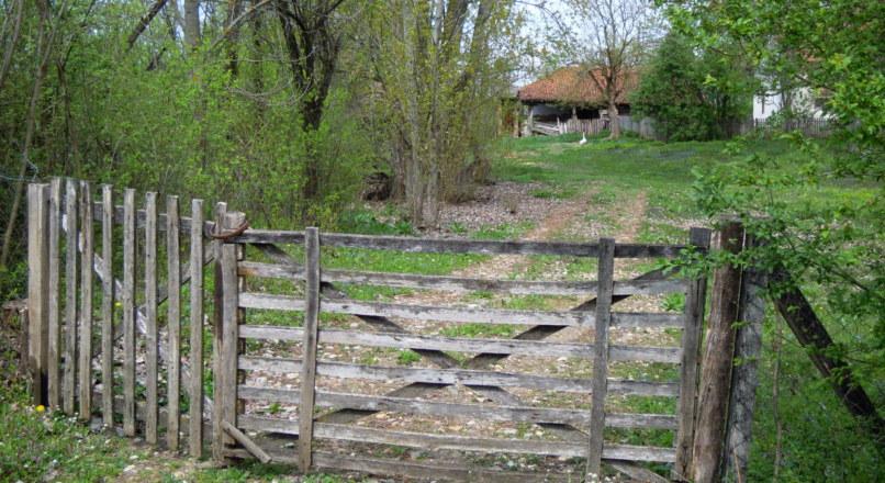 Mandiocultura: perfil dos produtores