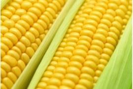 Oportunidades no mercado de milho e derivados