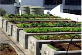 Nicho de mercado da agricultura amplia oportunidades em áreas urbanas