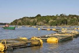 Paraná quer dobrar produção de carne de peixe