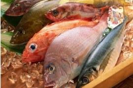 Estudos revelam fotografia da pesca e aquicultura no país