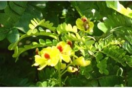 Um Viveiro de Oportunidades para Mudas e Sementes Nativas