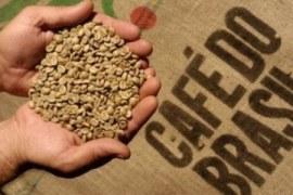 Produção de cafés certificados cresce no Brasil