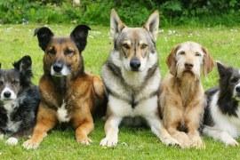 Oportunidade com o adestramento de cães