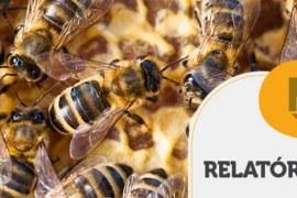RELATÓRIO INTELIGÊNCIA – Alimentação alternativa