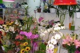 Escolhendo o lugar certo para abrir sua Floricultura