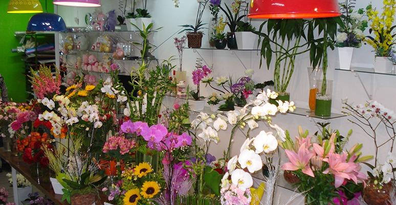 sebrae mercados, floricultura, locais para abertura de loja