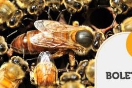 BOLETIM TENDÊNCIAS – Benefícios do Georreferenciamento na apicultura