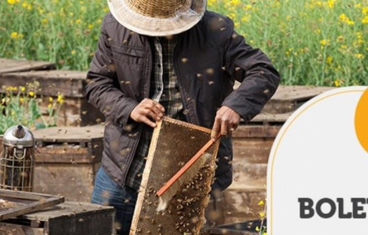 BOLETIM TENDÊNCIAS – Multiplicação do apiários