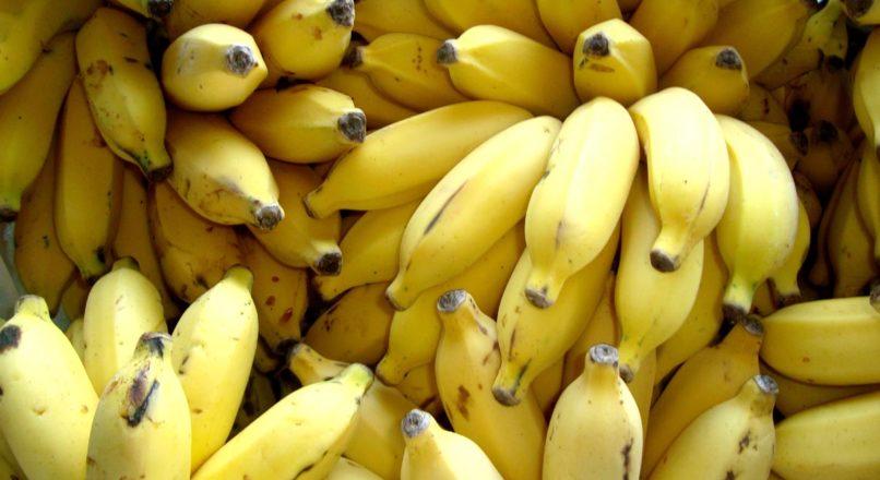 Investir em banana orgânica é um bom negócio