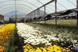 Abrindo uma empresa de cultivo de flores
